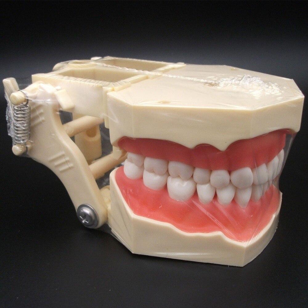 Dental Teaching Standard Model Soft Gingiva Spring Adjustable DentistryDental Teaching Standard Model Soft Gingiva Spring Adjustable Dentistry