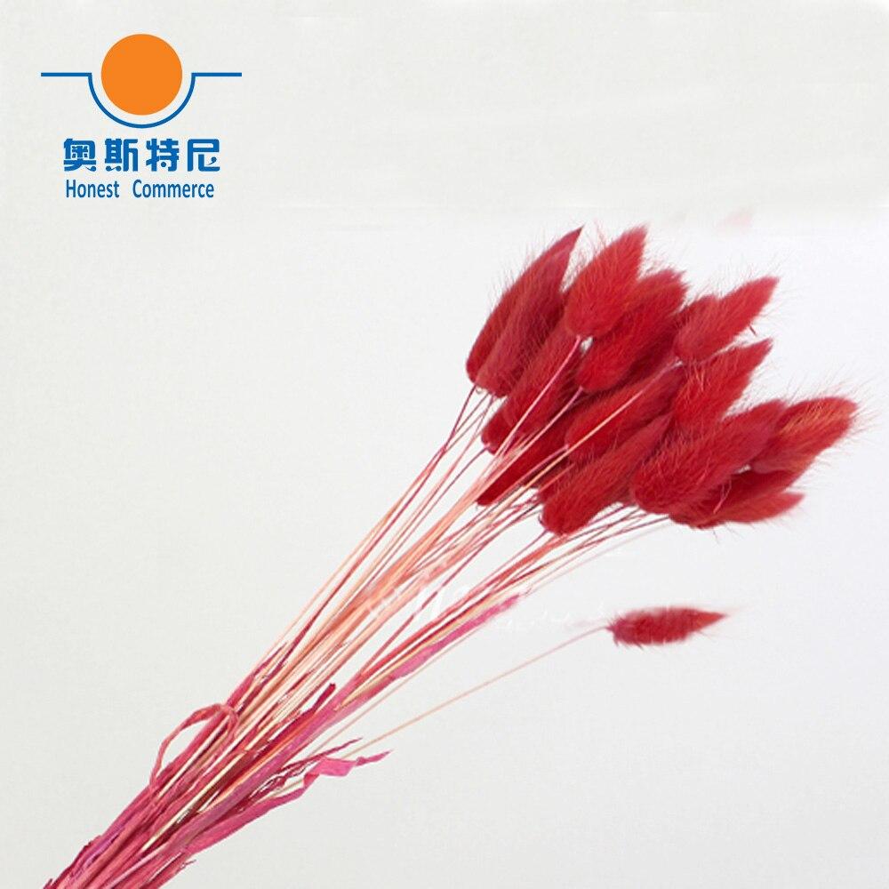 unids ramos de flores secas naturales de color rojo lagurus ovatus ramos y uraria picta y cola de conejo hierba ramos de flor