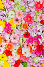 Floral Bed Photography Backdrop colorful flower Custom Photo Prop backgrounds D-1637