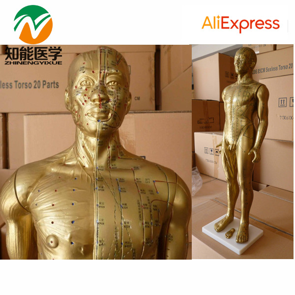 Human Acupuncture Model(Acupuncture Manikin) 178CM BIX-Y1002 WBW120 deluxe acupuncture model 178cm acupuncture model