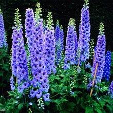 Buy  nium Flowers potted bonsai DIY home garden  online