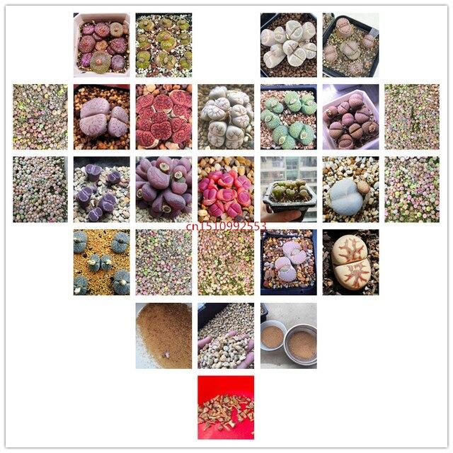 50 قطعة البسيطة Lithops الزهور بونساي المعيشة الأحجار ميكس عصاري الصبار العضوية شرفة أصائص زرع للمنزل لوازم حديقة-2
