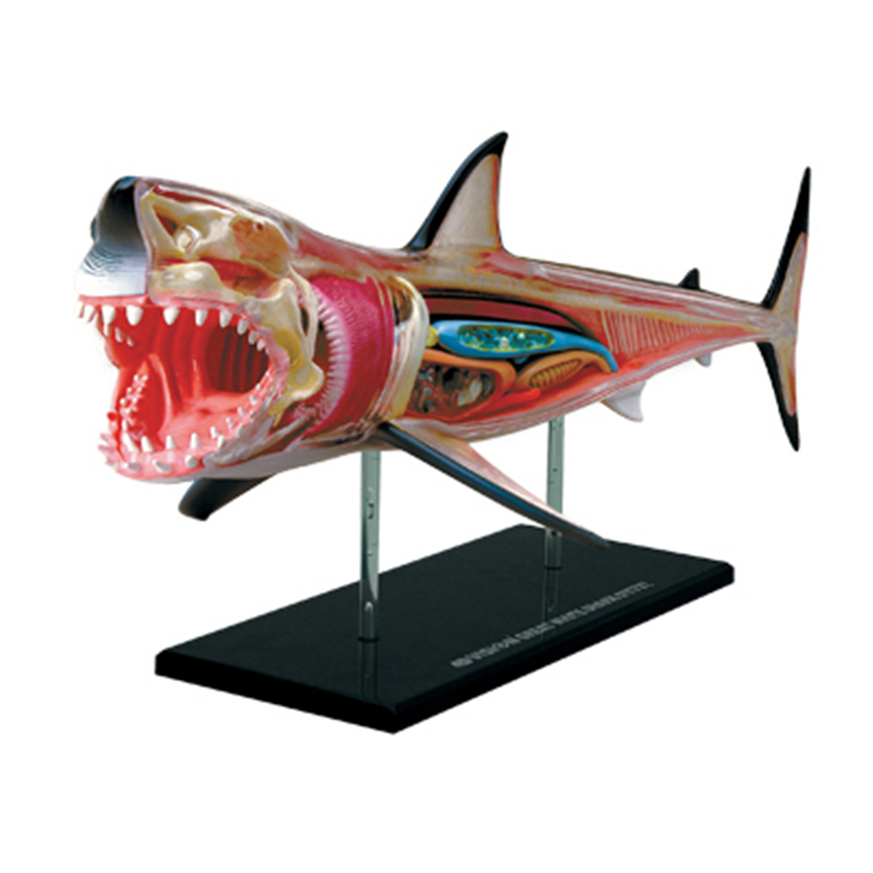 4D Shark Intelligence Assembling Toy Animal Organ Anatomy Model Medical Teaching DIY Popular Science Appliances