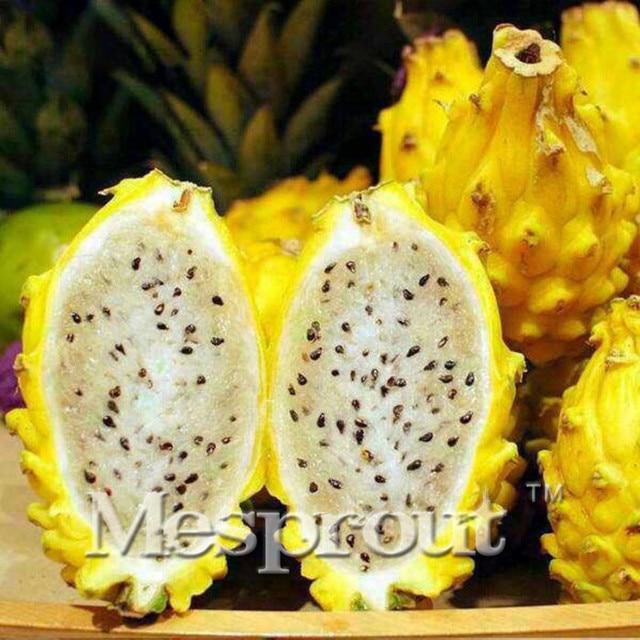 100PCS Rare Yellow Pitaya Fruit Trees Seeds Perennial Plants Non-gmo Hylocereus Dragon Fruit Seeds Home Garden