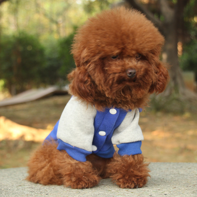 Dog Coat for Small Dogs 3