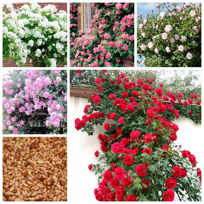 """18/"""" 24 Roses - Artificial /'Real Touch/' Flowers Replica Imitation Plants 46cm"""