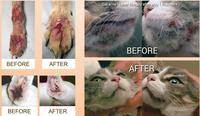 Ручной Портативный аккумуляторная Животные облегчить боль собаки лошади кошки животные ветеринарии низкий уровень холодной лазерной тера