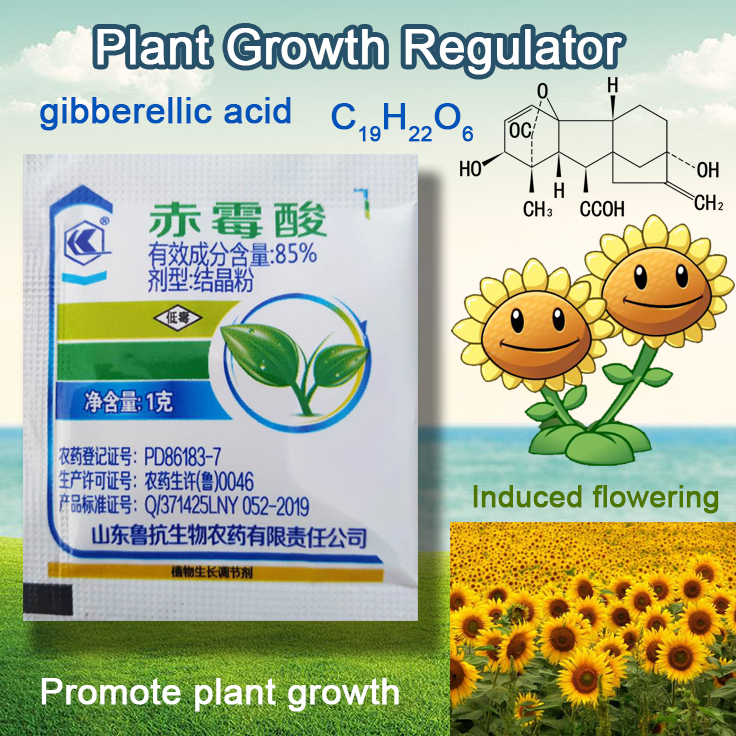1 G Concentrate Gibberellic Acid 920 Plant Growth Regulator Break Sleep Fertilizer Increase Production For Home Garden Bonsai