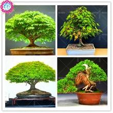 20 pcs/bag Graines Mini& Beautiful Japanese Green Maple Seeds Bonsai Ornamental Diy Plant Flower Pot Indoor Garden Tree Seed