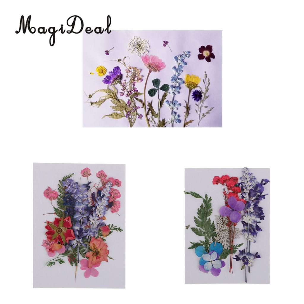 Multiple Beautiful Real Pressed Flower Dried Flowers For Art Craft