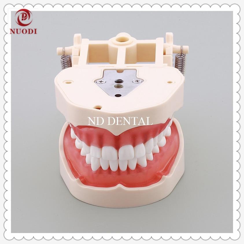 Spring adjustable Standard Teaching Teeth Model Soft Gum/Dental Study Teeth Model with32 screw in teeth/Teeth MODEL With bracket teeth model blue dental orthodontics communication model with 4 types of brackets