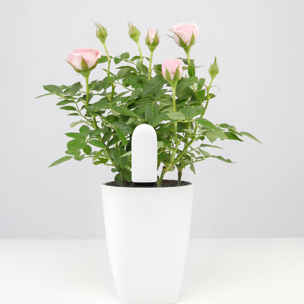 Original-Xiaomi Flora-Monitor-Flowers-Care Smart-Tester- (4)