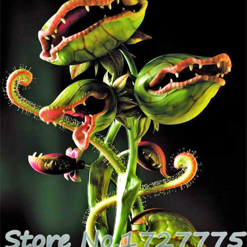 New Arrival Home Garden 20 Seeds Venus Fly Trap Dionaea Muscipula Carnivorous Plant Seeds Free Shipping Diy Plant Semente