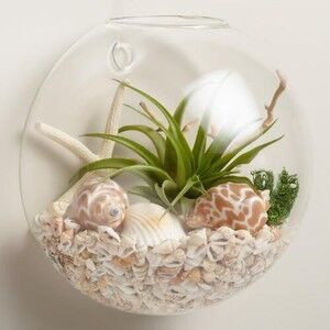 Wall Hanging Glass Planter Vase Wall Glass Goldfish Bowl