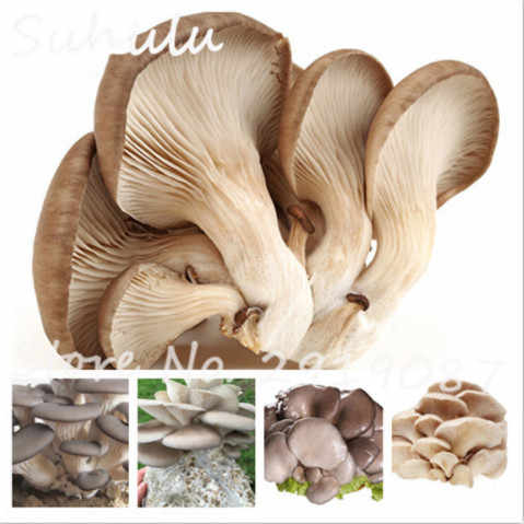 Organic Delicious Giant Mushroom Bonsai 50 Particles Rare Green Vegetable Easy To Grow In Garden And Courtyard Plants