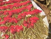 Czerwony Wciśnięty Bukiet Kwiatów Prawdziwych Roślin Kwiatowych Daisy Na Suszone Pędy Props1 Nauczania Okazy Dla Dzieci lot/10 torby (120 sztuk kwiaty)