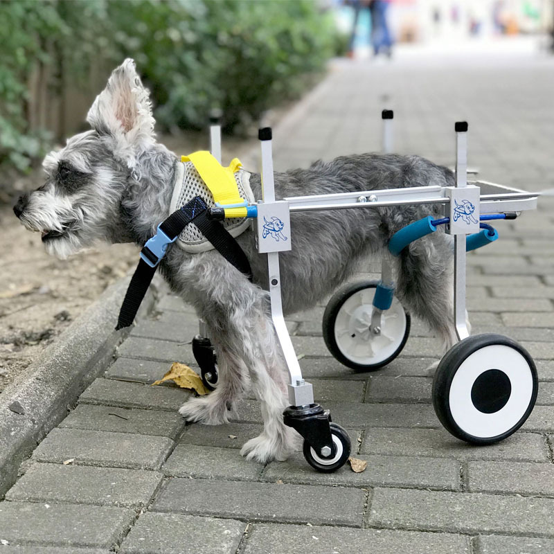 Four Wheels Adjustable Dog font b Wheelchair b font Fore Leg Rehabilitation Cart Paralyzed Pet Walk