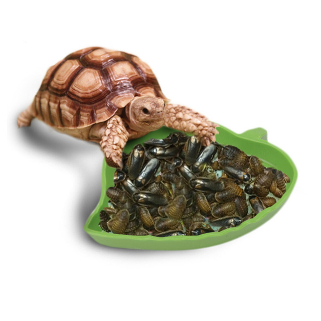 Bowl for Feeding Reptiles
