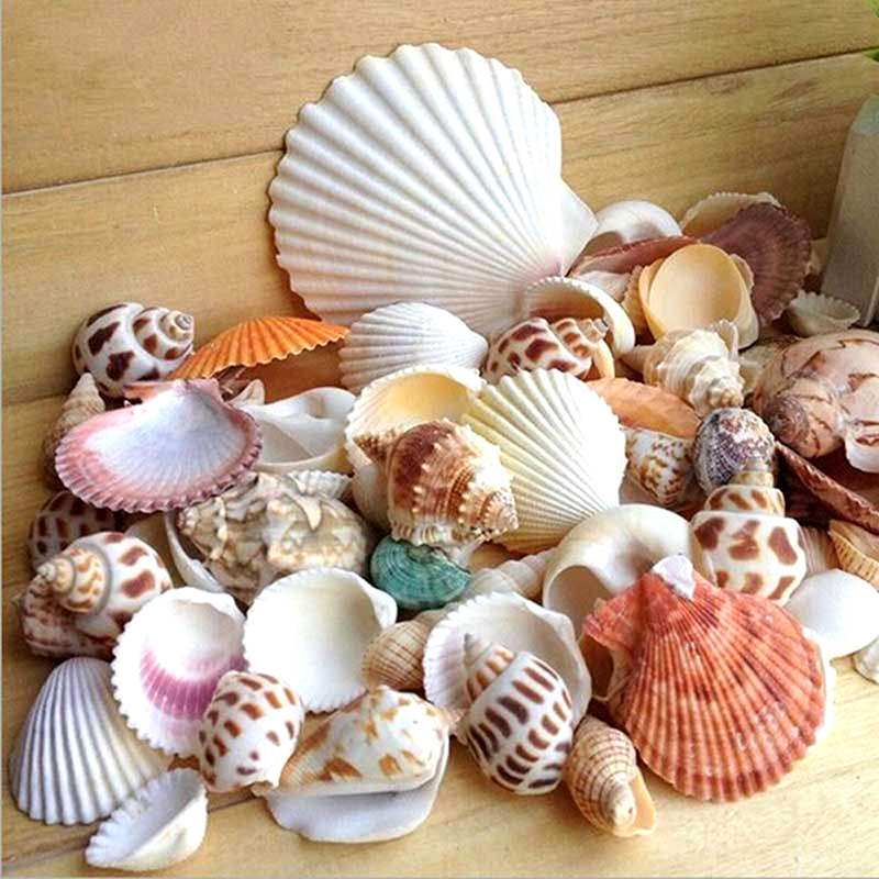 Natural Shell Embellishments Cone Conch DIY Crafts Supplies Mediterranean Shell Conch Starfish Landscape Aquarium Decorative
