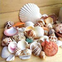 Natural Shell Embellishments Cone Conch DIY Crafts Supplies Mediterranean Shell Conch Starfish Landscape Aquarium Decorative