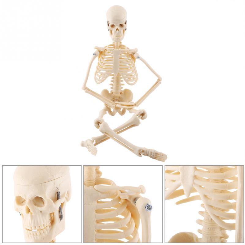 Modèle squelette anatomique humain Fexible grandeur nature en gros squelette médical aide à l'anatomie art squelette croquis 45CM
