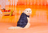 Cat clothes, spring vest warm vest Garfield, kitten, cat spring dress cat clothes