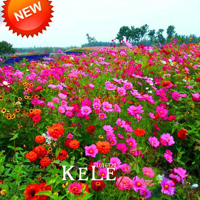 ᗔNueva llegada! 200/Lot flores silvestres semillas waterlogging ...