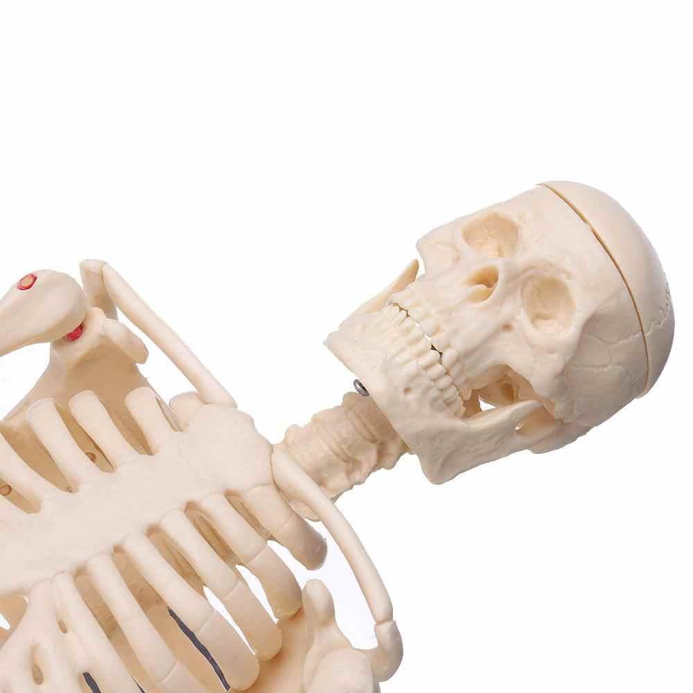 NUOVO Mini Staccabile Scheletro Umano Modello di Osso Rimovibile Braccia Gambe w Del Basamento Del Metallo Modello Anatomico modello di Insegnamento Medico