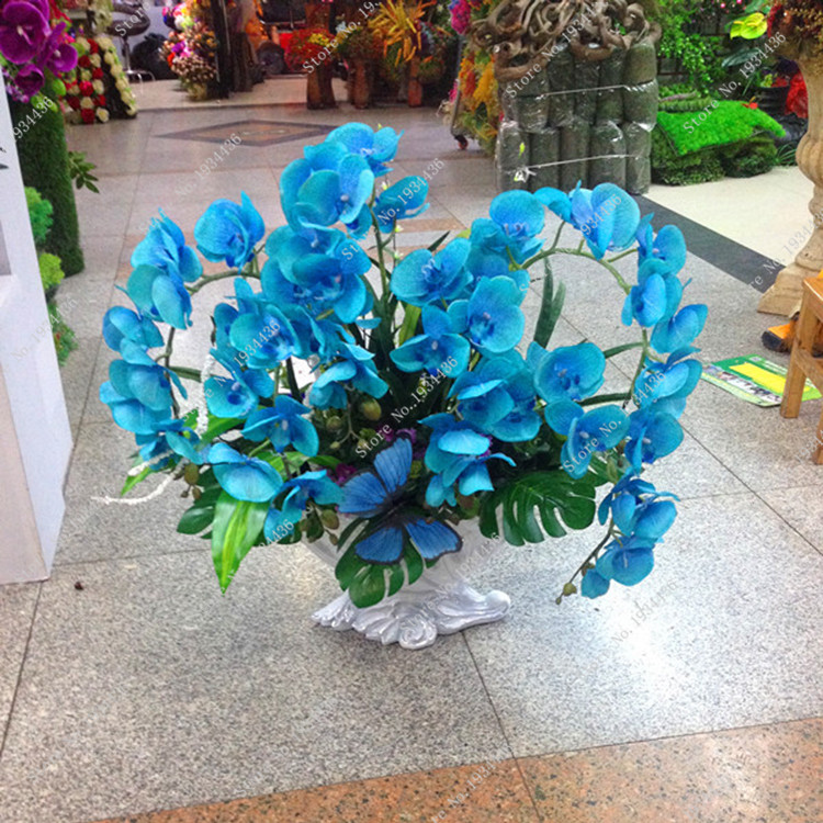 blue exotic flower promotionshop for promotional blue exotic, Beautiful flower