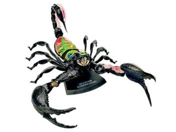 4d Scorpion Animal Anatomy Model Skeleton Medical Teaching Aid Laboratory Education Equipment master puzzle Assembling Toy