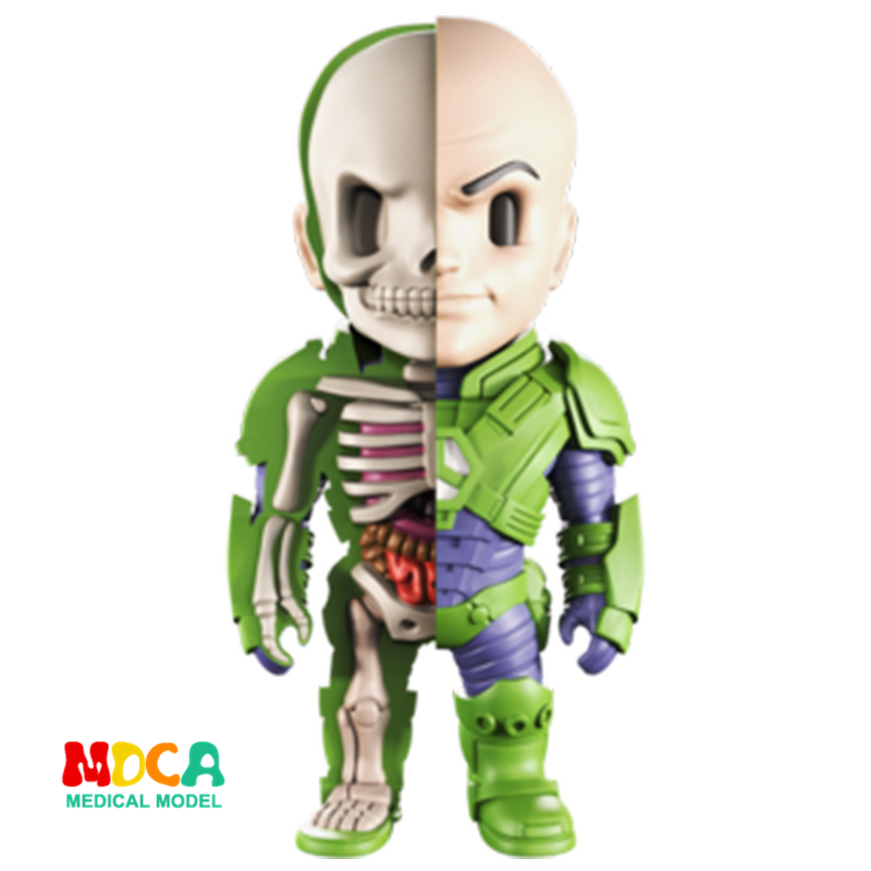 LEX LUTHOR 4D XXRAY master Mighty Jaxx Jason Freeny anatomy Cartoon ornament killer croc 4d xxray master mighty jaxx jason freeny anatomy cartoon ornament