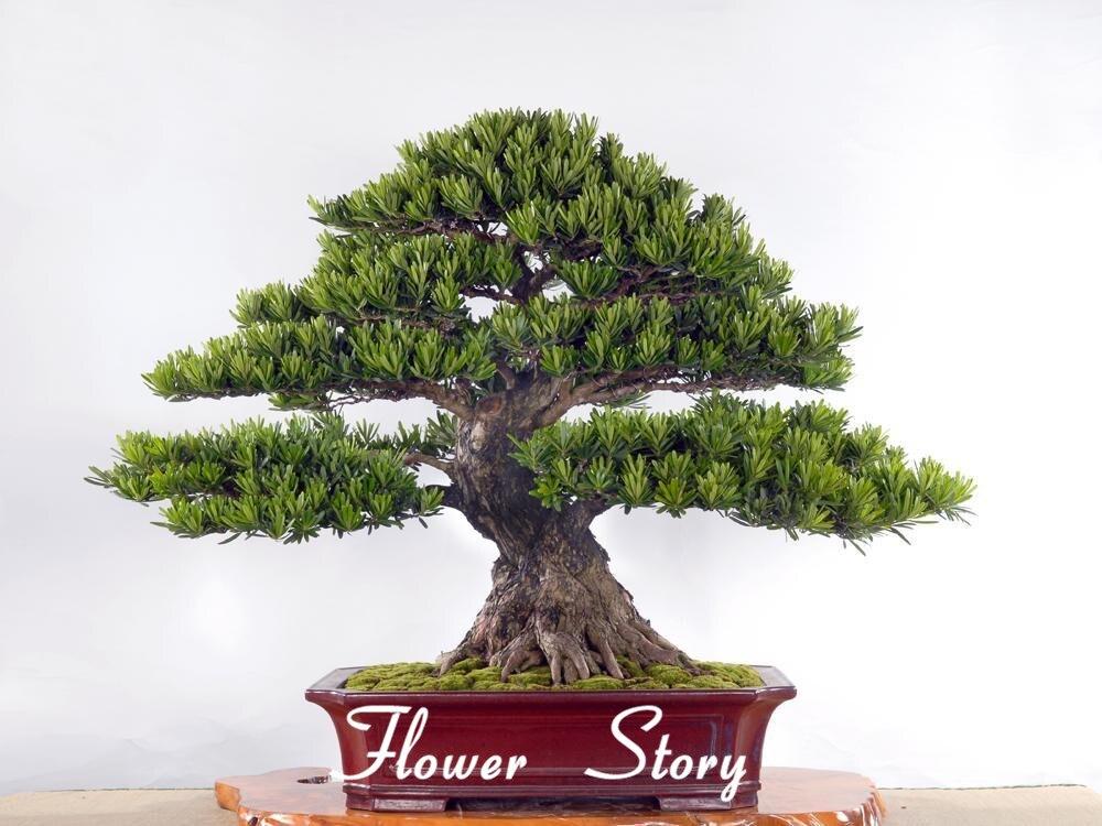 Bonsai baum garten  Bonsai Baum Garten – msglocal.info