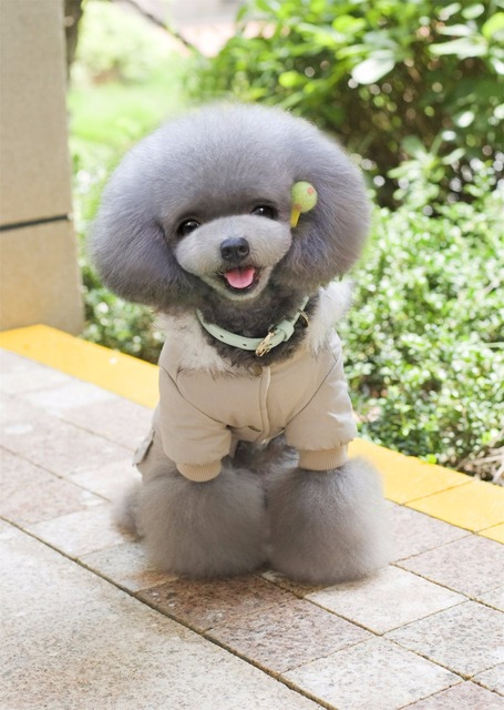 New Thickness Hooded Driver Style Pet Dogs Four Legs Cotton Winter Coat  Free Shiping By CPAM Warm Small Puppy Dogs Clothing 4