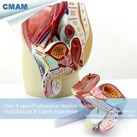 Товары для изучения медицины cmam/anatomy05 , >