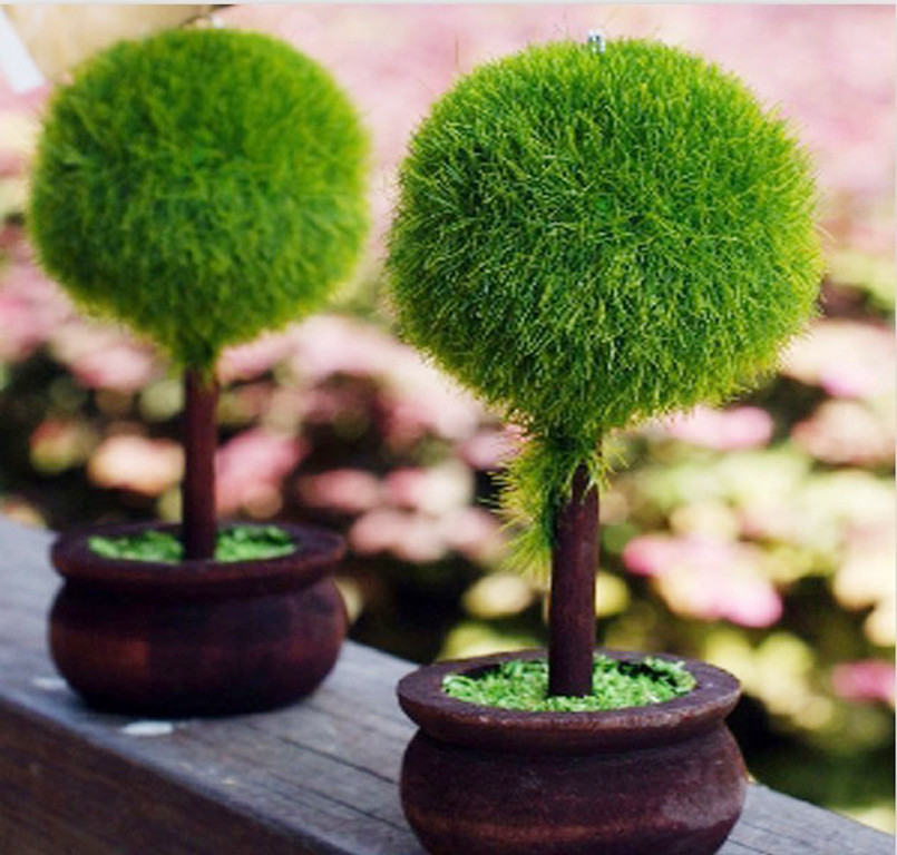 Free shipping DHL 100pcs/lot Wedding favor Topiary tree Photo and ...