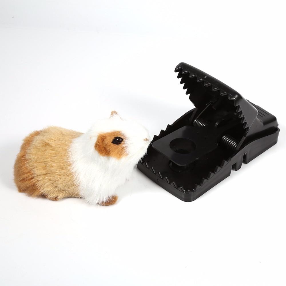 Como Cazar Ratones. Cool Esto Es Una Trampa Para Cazar Ratones Y ...