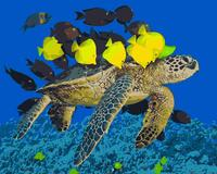 MaHuaf J419 Hawaiian Sea Turtle Set For Drawing By Numbers Art Animal Pictures For Living Room
