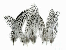 Wholesale! 50pcs/lot 15-20cm 6-8inch NATURAL Silver Wing Pheasant Feathers  FREESHIPPING