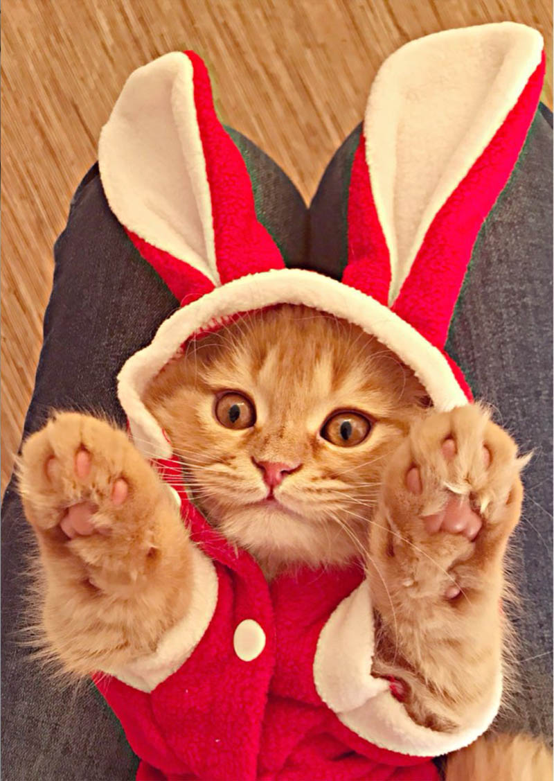 Cute Cat Clothes Easter Rabbit Animals Clothing Costume Fleece