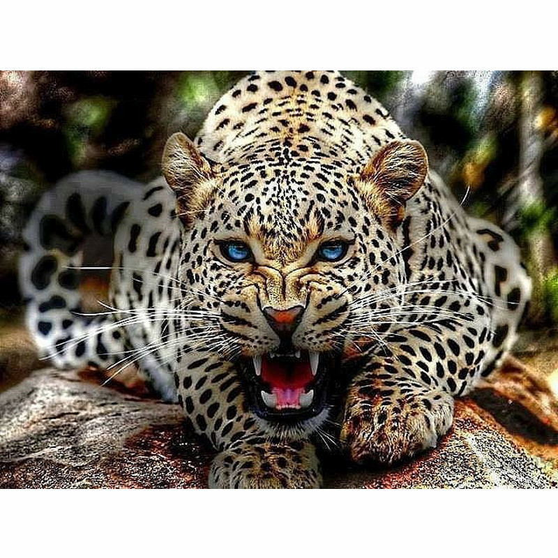 Leopard Bedroom Ideas For Painting: CHUNXIA Framed DIY Painting By Numbers Leopard Acrylic