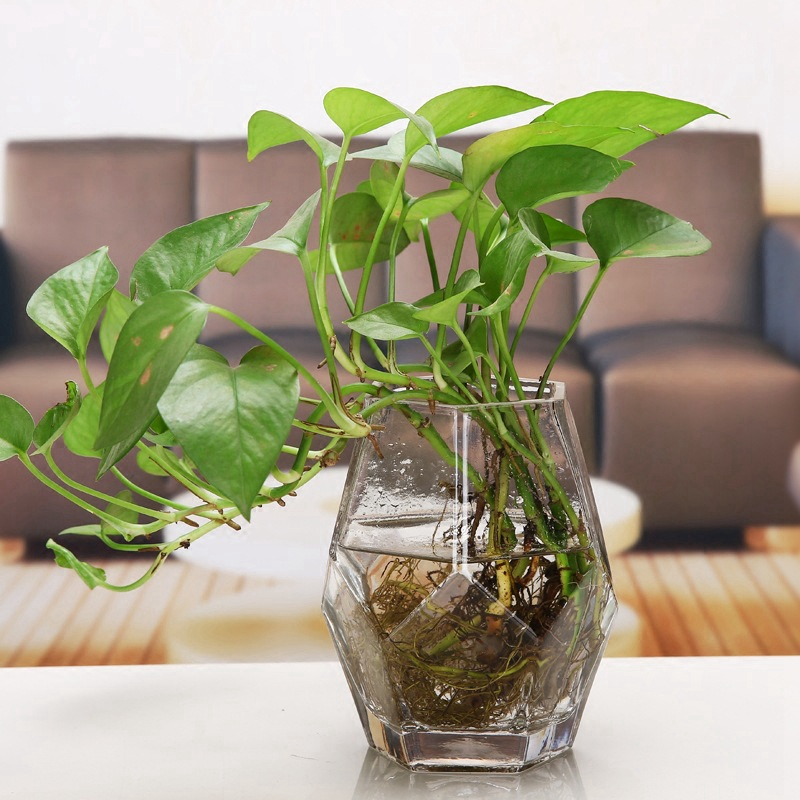 Transparent Desktop Glass Vase Geometric Shape Hydroponic Container Terrarium <font><b>Plant</b></font> Flower Pot Glass Vase Home Office Decor