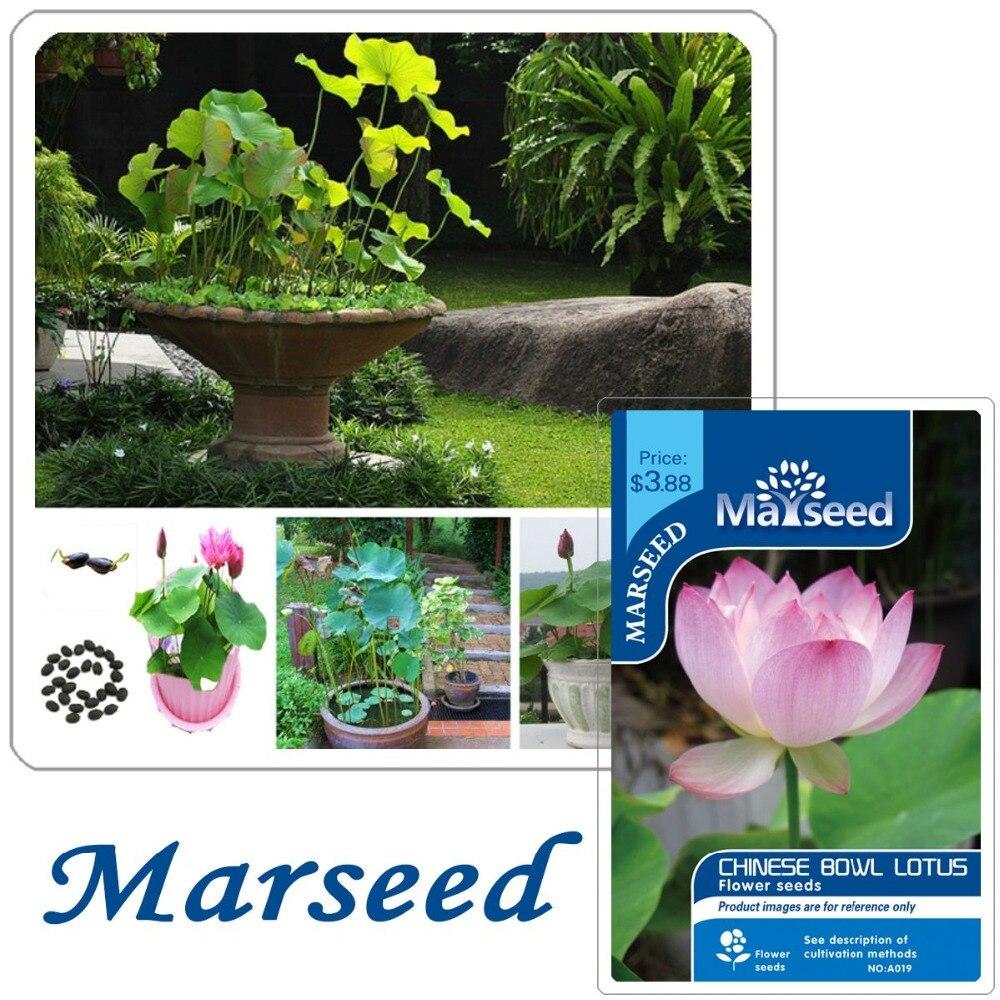 Aliexpress Buy Big Promotion 10 Chinese Bowl Lotus Flower