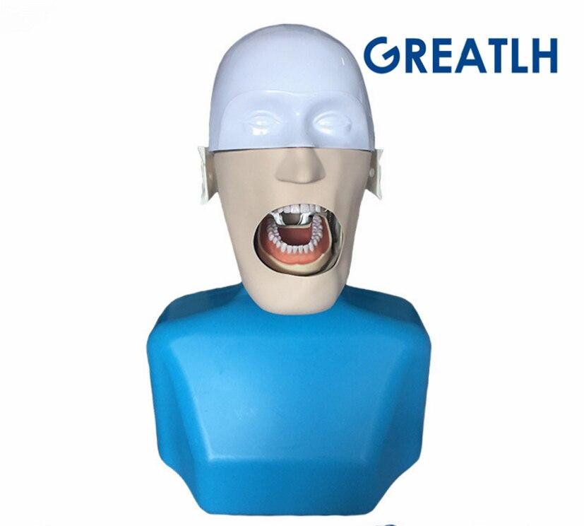 Tête fantôme de mannequins dentaires pour la dentisterie et la technologie dentaire tête fantôme de mannequins Sennior avec torse