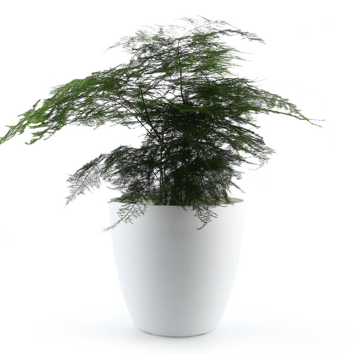 T4U 13.75 Plastic Self Watering Planter with Water Level Indicator White, Modern Decorative Planter Pot for All House PlantsT4U 13.75 Plastic Self Watering Planter with Water Level Indicator White, Modern Decorative Planter Pot for All House Plants