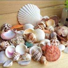 POP товара! 100 г/пакет микс морской пляж ракушки ремесла ракушки аквариум Декор фото реквизит