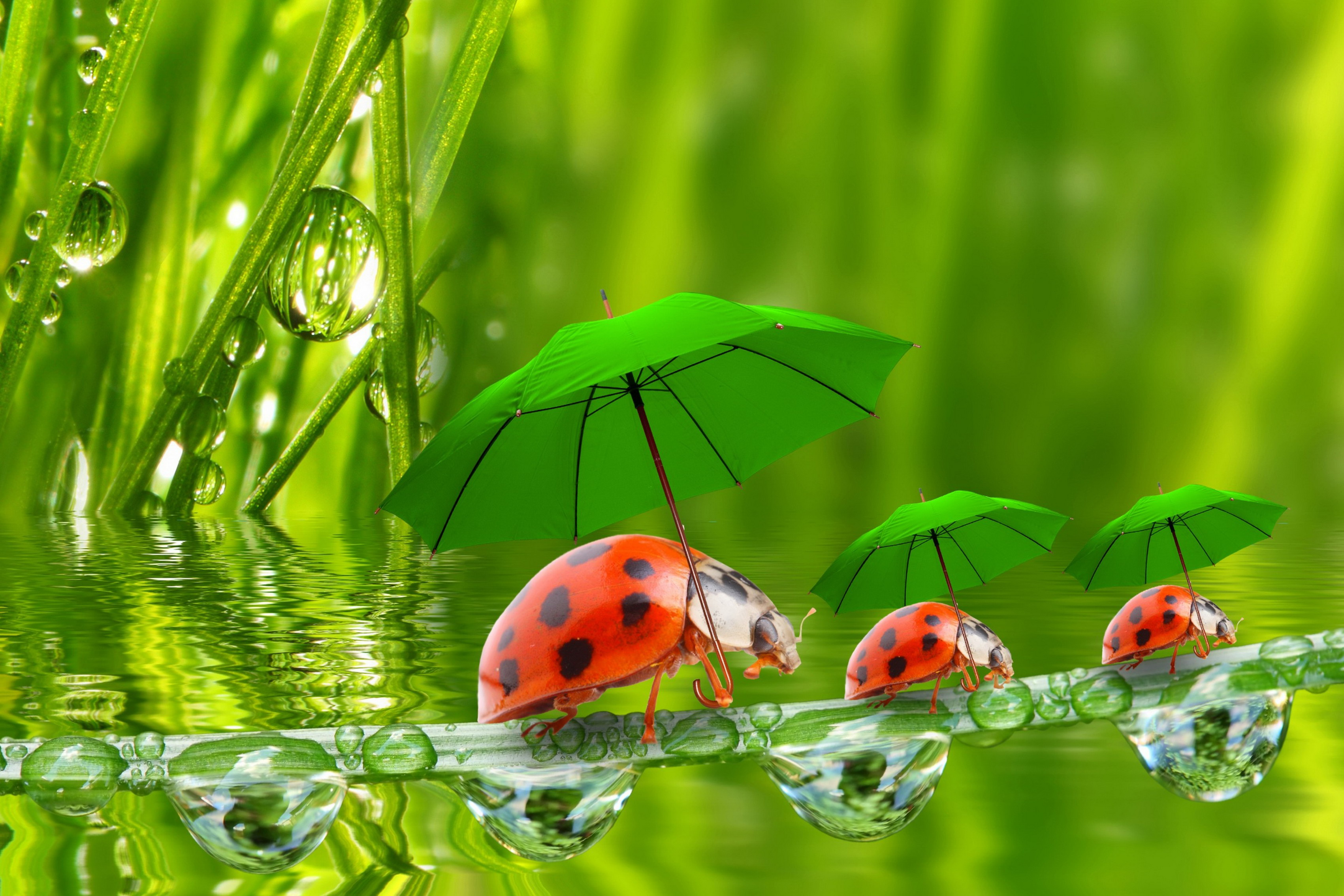Ladybug Bedroom Decor Compare Prices On Umbrella Posters Online Shopping Buy Low Price