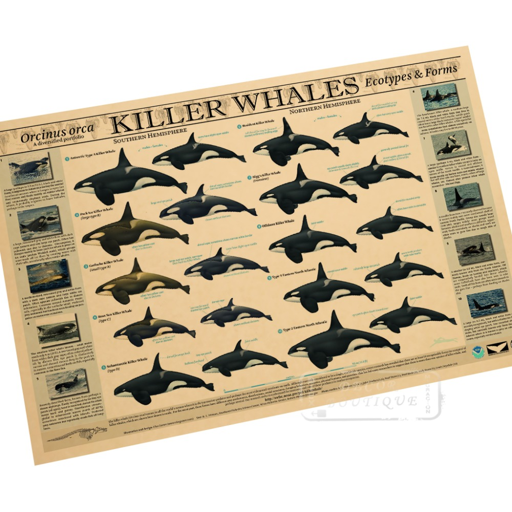 Buy stickers killer whale and get free shipping on AliExpress.com