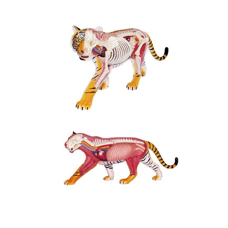 3d Puzzle Assembling Diy Toys Transparent Assembled Tiger Anatomy