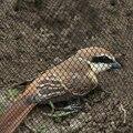 Против Ловца птиц чистая ловушка Урожай фрукты овощи сад сетка борьба с вредителями