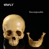Decomposable medical skull 1:1 resin skull crafts personality ornaments office bar decoration demon skull 26x24x19cm weight 650g